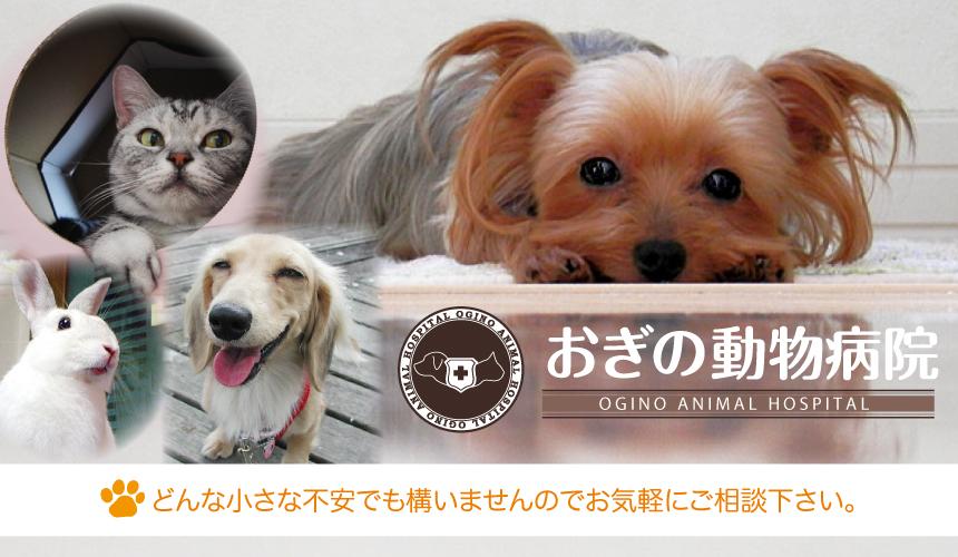 奈良県香芝市にある「おぎの動物病院」
